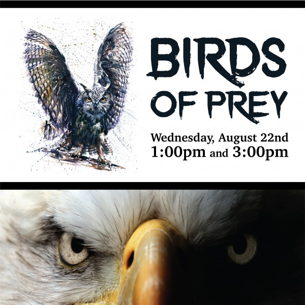 BIRDS OF PREY - 2 shows on Wed Aug 22 @ 1pm & 3 pm